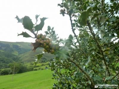 Senderismo Valles Pasiegos, Cantabria; patones rutas viajes de navidad excursiones sierra de madrid